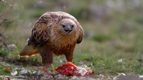 dörtdivan-kızıl
